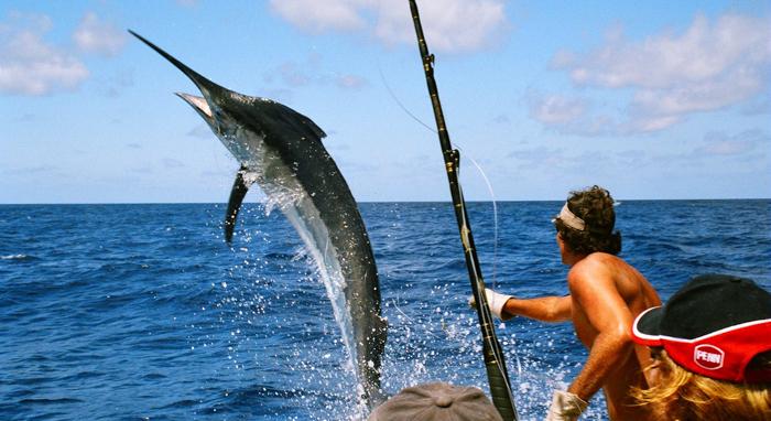 在坦帕钓鱼