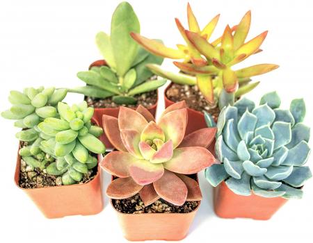 多肉植物5盆栽