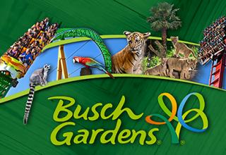 busch-gardens 坦帕